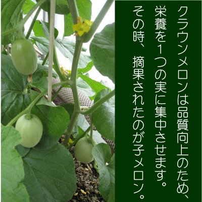 画像2: 子メロン 1Kg(約10〜18個入り) 【送料別】